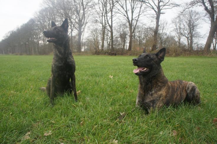 Laska (links) en Bolle (rechts)