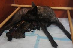 Pups A-nest