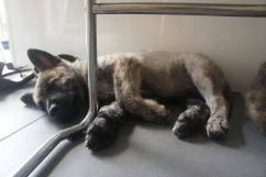 Na het dierenarts bezoek en diner ..zijn we moe!