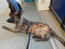 Akyra in de trein